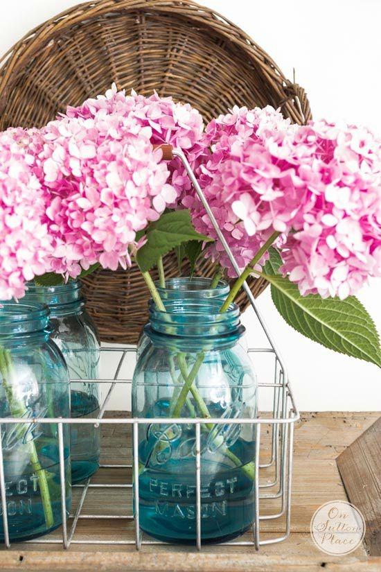 endless-summer-pink-hydrangeas