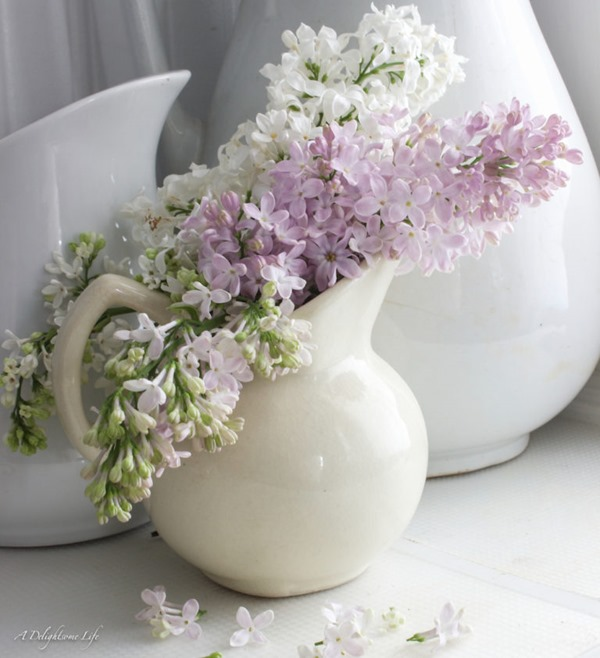 Lilacs-in-your-Southern-Garden-7-768x841