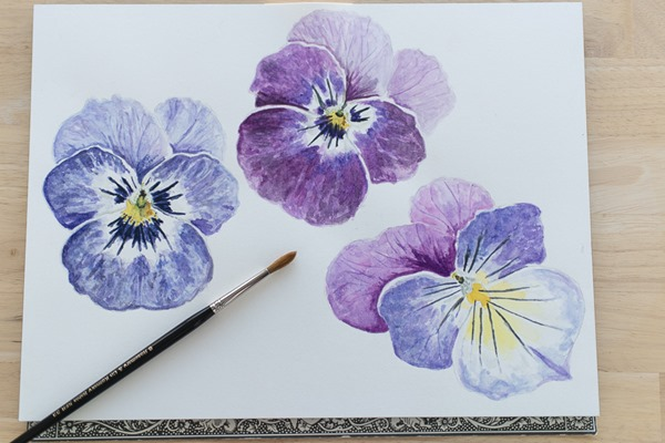Pansy-Watercolors