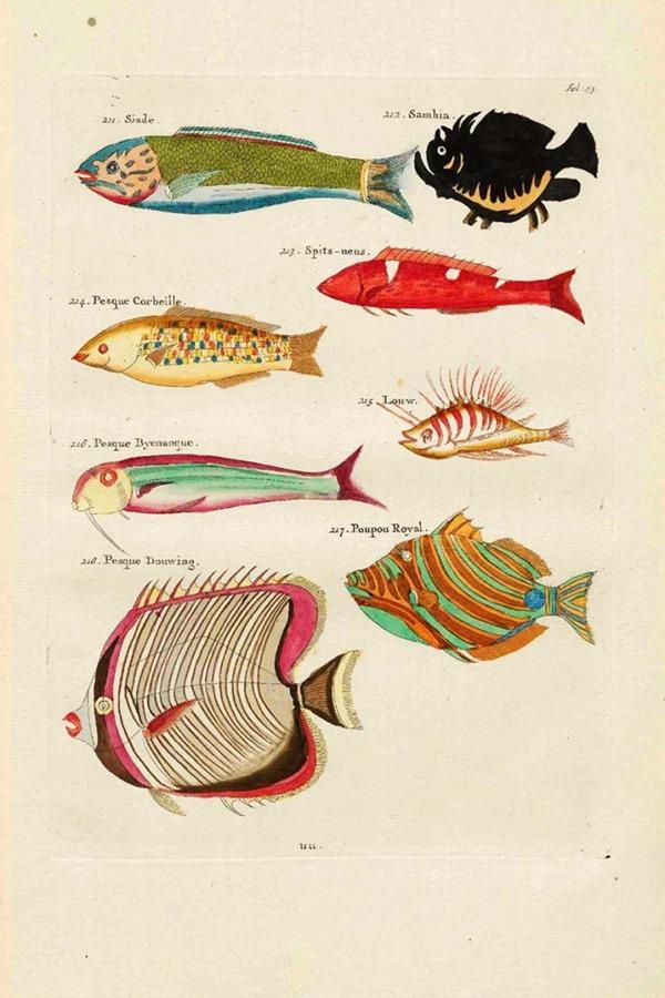 Fish-paintings-211-218-Siade-Louis_Renard-s